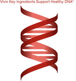 Vivix Key Ingredients Support Healthy DNA*