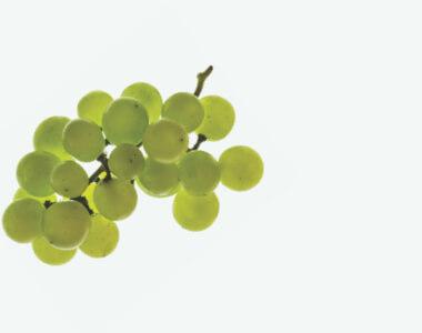 Chardonnay grape seed